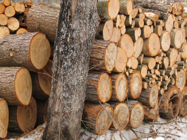 wood-1404955-640x480